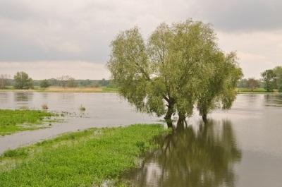 oder-bei-hochwasser_janina-briesemeister_pixeliode.jpg